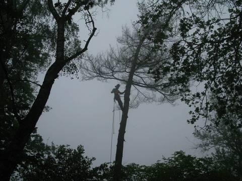 Taille et abattage d'arbre