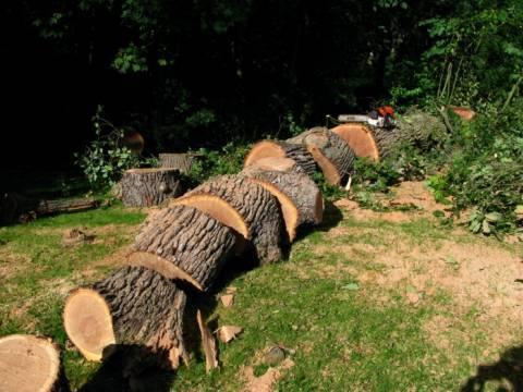 abattage d 39 arbres. Black Bedroom Furniture Sets. Home Design Ideas